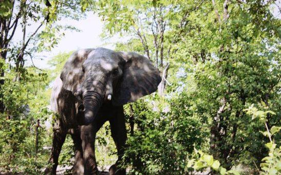 Elephants chase Ogun villagers, cause pandemonium
