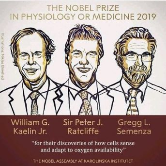 2019 Nobel Prize in Physiology or Medicine Awarded To 3 Scientists